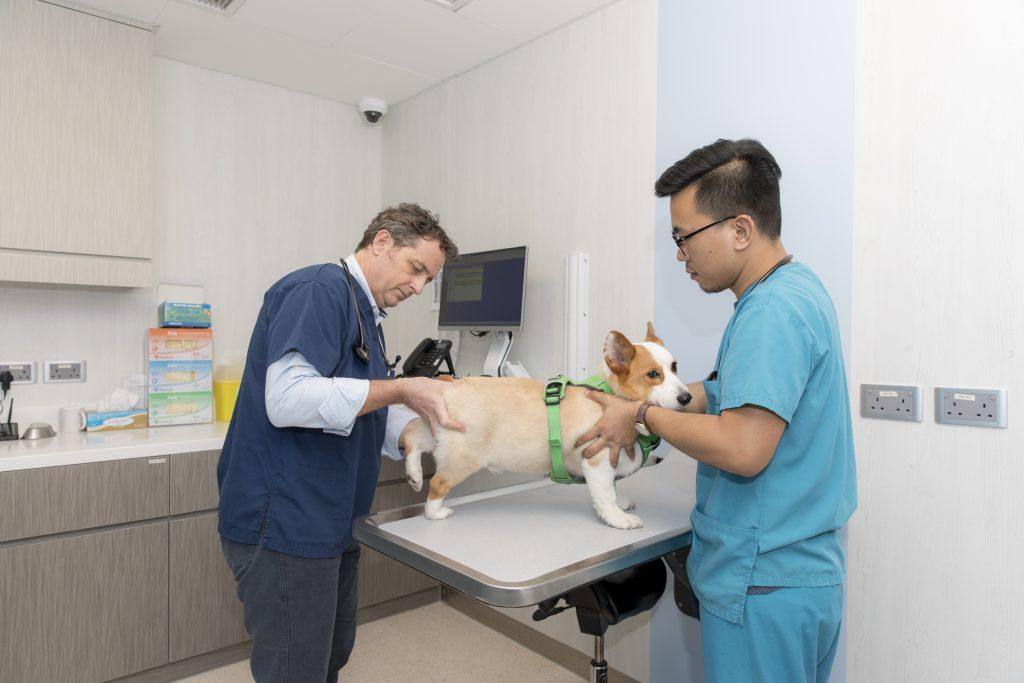 Small Animal Surgery Cityu Vmc